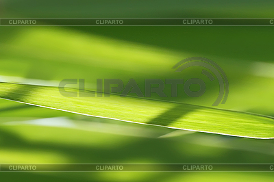Green grass | High resolution stock photo |ID 3088447