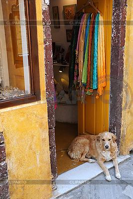Pies przy wejściu do sklepu z pamiątkami | Foto stockowe wysokiej rozdzielczości |ID 3106131
