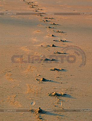 Buffalo Footprints | Foto mit hoher Auflösung |ID 3106313