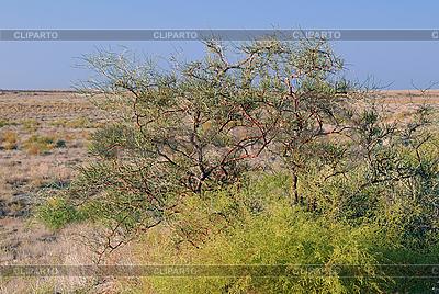 Strauch Vegetation in Prairie | Foto mit hoher Auflösung |ID 3108722
