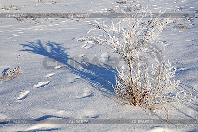 Shrub in the Field Covered with Snow | 높은 해상도 사진 |ID 3125493