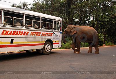 Wilder Elefant attackiert einen Bus | Foto mit hoher Auflösung |ID 3186096