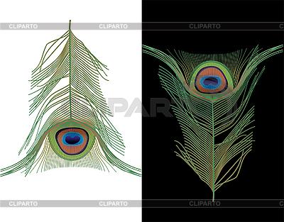 Pawie pióra   Klipart wektorowy  ID 3094341