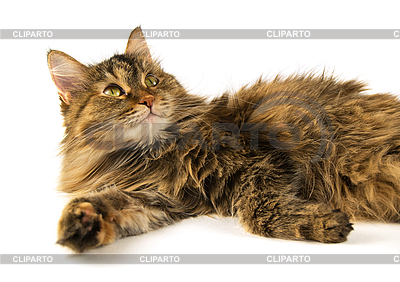 Fluffy cat | High resolution stock photo |ID 3104905