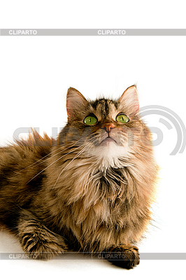 Fluffy cat looking up | High resolution stock photo |ID 3104906