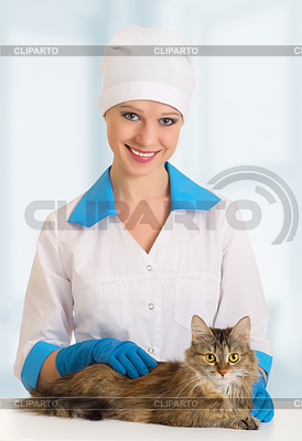 Cat on examination by veterinarian   High resolution stock photo  ID 3279990
