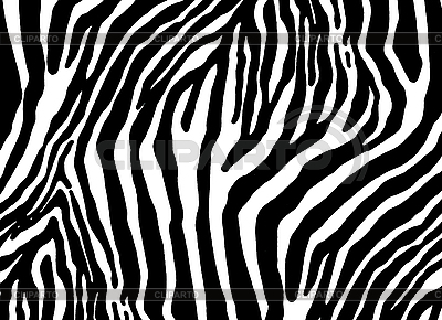 Zebra texture | High resolution stock illustration |ID 3094566