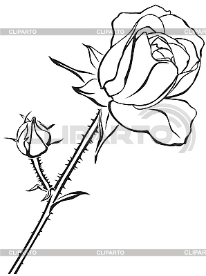 Little rose | Stock Vector Graphics |ID 3096347