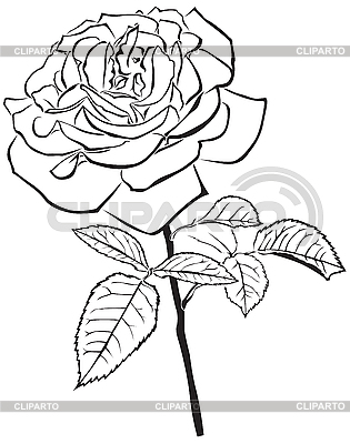 Large rose | Stock Vector Graphics |ID 3113242
