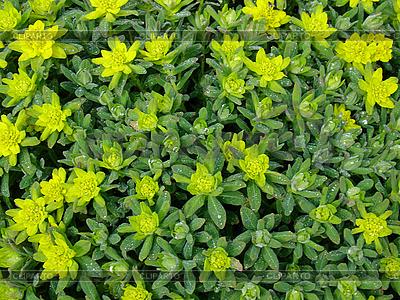 Blumenhintergrund | Foto mit hoher Auflösung |ID 3120087