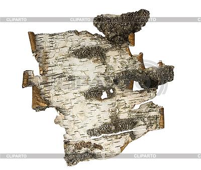 Bark of birch | Foto stockowe wysokiej rozdzielczości |ID 3095339
