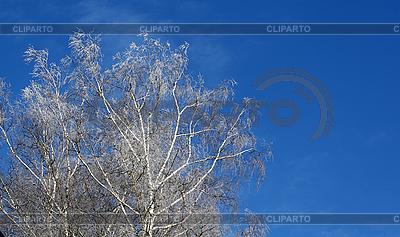 나무 늦었다 덮여 | 높은 해상도 사진 |ID 3091739