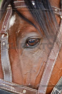 лошадьми формате в с большом фото