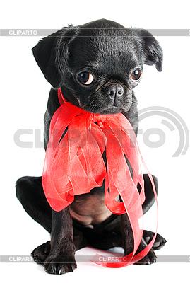Little black puppy  | High resolution stock photo |ID 3092978