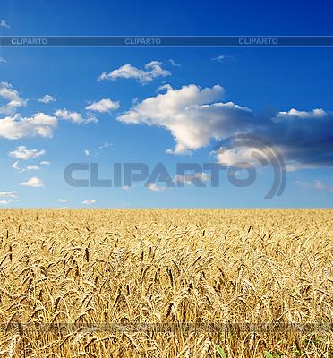Goldene Weizenähren unter dem Himmel | Foto mit hoher Auflösung |ID 3091738