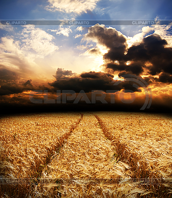 Road in field with gold ears of wheat | High resolution stock photo |ID 3091777