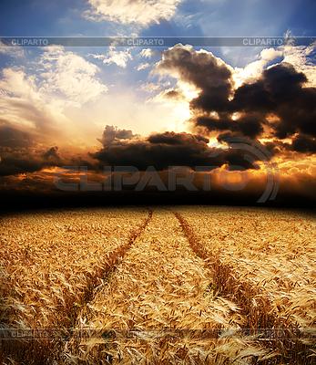 Carretera en campo con los oídos de oro de trigo | Foto de alta resolución |ID 3091777
