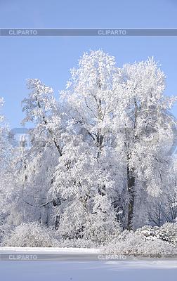 Reif auf Baum am frostigen sonnigen Tag | Foto mit hoher Auflösung |ID 3093776