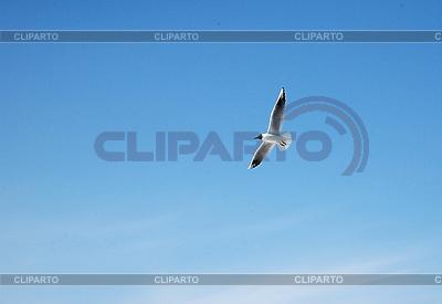 Möwe im Flug | Foto mit hoher Auflösung |ID 3120151