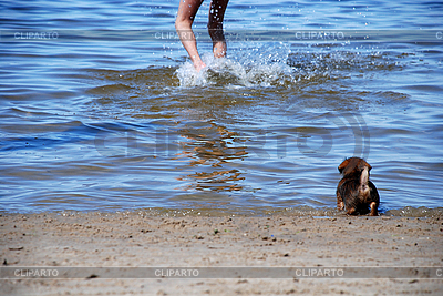 Game with small puppy at seacoast | High resolution stock photo |ID 3120526