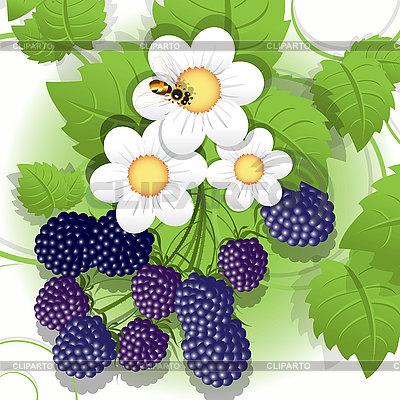 Blackberry | Stock Vector Graphics |ID 3095985