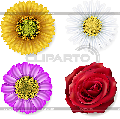 Set of flowers | Stock Vector Graphics |ID 3184214