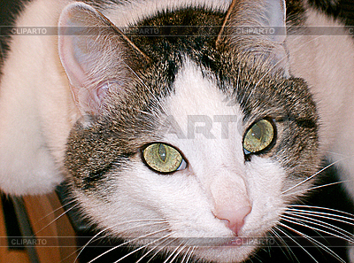 Green-eyed cat   High resolution stock photo  ID 3109275