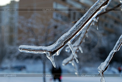 Tree branches in ice | High resolution stock photo |ID 3109280