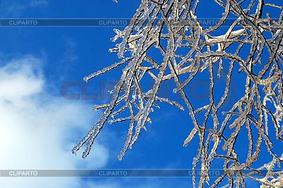 Gałęzie drzewa w śniegu i lodzie | Foto stockowe wysokiej rozdzielczości |ID 3109283