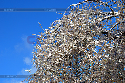 Tree branches in snow   High resolution stock photo  ID 3109284