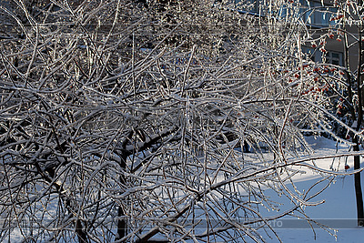 Tree branches in ice   High resolution stock photo  ID 3109285