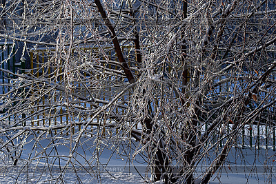 Tree branches in ice   High resolution stock photo  ID 3109286