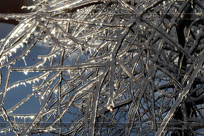 Tree branches in ice | High resolution stock photo |ID 3109288