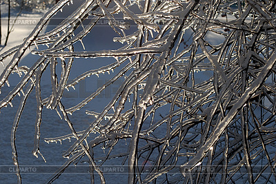 Tree branches in ice | High resolution stock photo |ID 3109290
