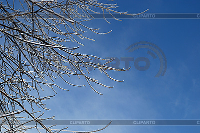 Tree branches in ice | High resolution stock photo |ID 3109292