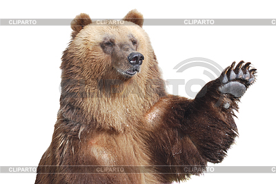 Brown bear welcomes with paw   High resolution stock photo  ID 3329808
