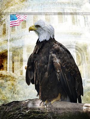 Águila calva americana | Foto de alta resolución |ID 3370659