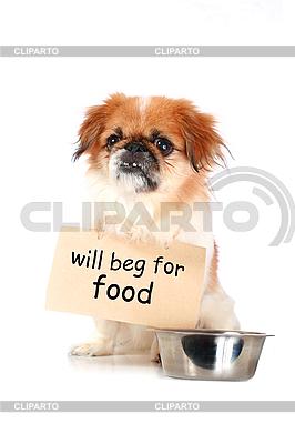 Little dog | High resolution stock photo |ID 3107329