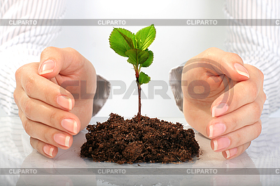 Small plant in hands   High resolution stock photo  ID 3107378
