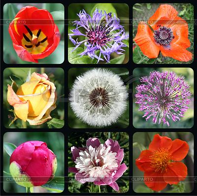 Blumen-Dingbats | Foto mit hoher Auflösung |ID 3350985