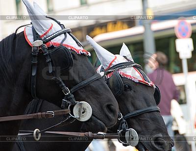 Paar schwarze Pferde | Foto mit hoher Auflösung |ID 3109638