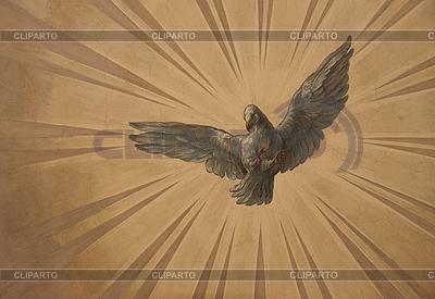 太阳光线的鸽子 | 高分辨率照片 |ID 3109658