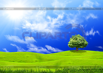 Green grass and blue sky | High resolution stock photo |ID 3112664
