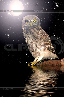 Owl at water | High resolution stock photo |ID 3200831