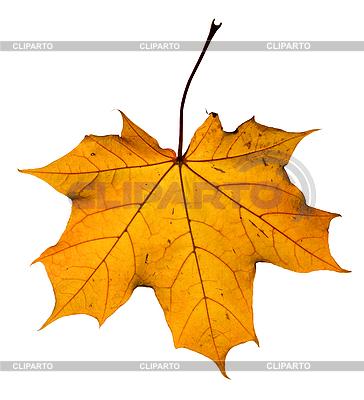 단풍 나무 잎 | 높은 해상도 사진 |ID 3113948