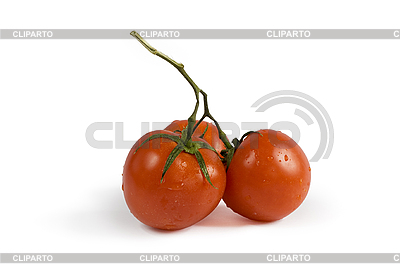 Three red tomatoes with shadow   High resolution stock photo  ID 3114510