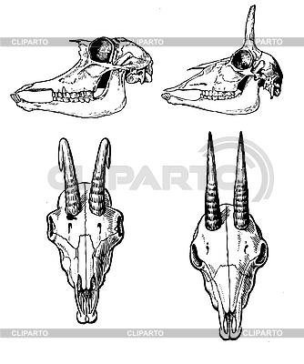 Czaszki dzikich zwierząt   Stockowa ilustracja wysokiej rozdzielczości  ID 3113208