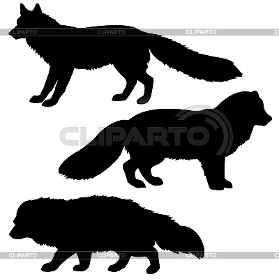 Silhouettes of polar fox, badger and red fox | Stock Vector Graphics |ID 3113281