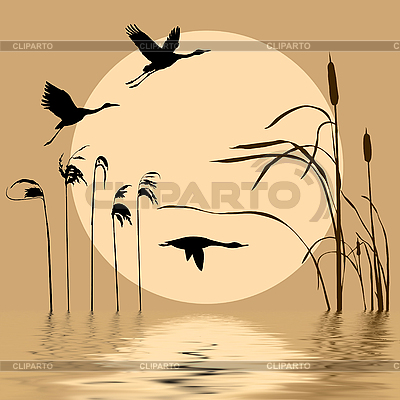 Silhouettes of birds on lake | Stock Vector Graphics |ID 3115819