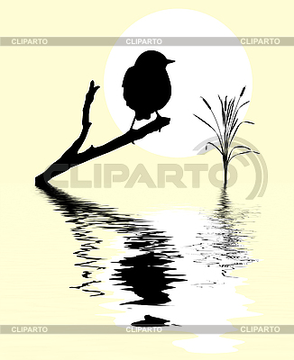 Small bird on branch tree amongst water | Stock Vector Graphics |ID 3115831